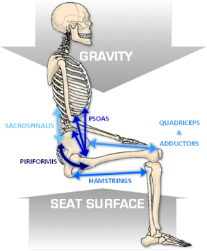 Image_7_Muscles__Forces_in_Seating.png